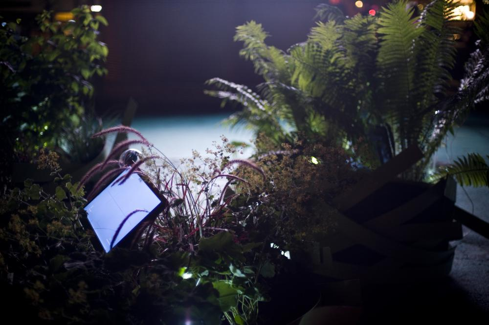 Organic Cinema plants and screen in the dark